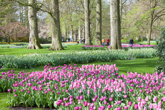 Keukenhof Flower Garden in Netherlands Stock Image