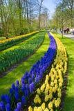 The keukenhof flower garden Stock Photography