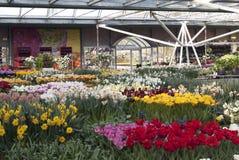 Keukenhof flowerpark Zdjęcia Royalty Free
