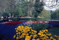Keukenhof  garden. Colorful tulips and yellow daffodils in full bloom during springtime by a lake in beautiful Keukenhof Park in Lisse Holland Stock Photo