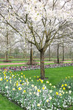 Keukenhof - Garden of Europe, Netherlands Royalty Free Stock Photo