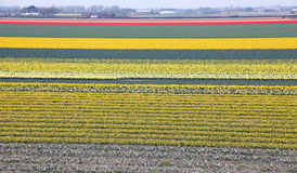 Keukenhof - Garden of Europe, Netherlands Stock Photography