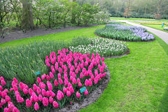 Keukenhof - Garden of Europe, Netherlands Stock Images