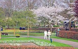 Keukenhof - Garden of Europe, Netherlands Royalty Free Stock Photography