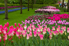 Keukenhof garden, Holland Royalty Free Stock Image