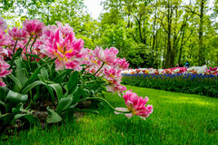 Keukenhof garden, Holland Royalty Free Stock Images