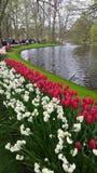 Keukenhof garden Holland Royalty Free Stock Photography