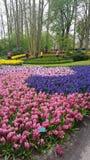 Keukenhof garden Holland Stock Photography