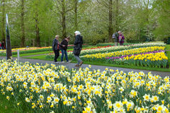 KEUKENHOF GARDEN, NETHERLANDS - APRIL 08: Keukenhof is the world's largest flower garden with 7 million flower bulbs on an area of Stock Image