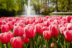 Keukenhof Garden - Netherlands Royalty Free Stock Photography