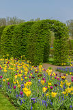 Keukenhof garden at sunny day , Netherlands Royalty Free Stock Photography