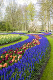 Keukenhof Gardens Royalty Free Stock Photography