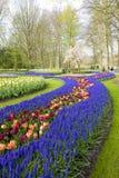 Keukenhof Gardens Royalty Free Stock Photography