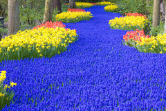 Keukenhof Gardens. In Lisse, Netherlands royalty free stock image