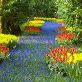 Keukenhof Gardens royalty free stock photo