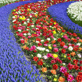 Keukenhof Gardens Stock Photography