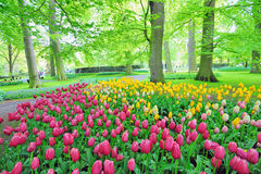 Keukenhof gardens. Shoot in spring time stock images