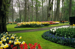 Keukenhof Gardens. Thousands of hyacinths and tulips bloom in the spring in Keukenhof Gardens, Lisse, The Netherlands Royalty Free Stock Photos