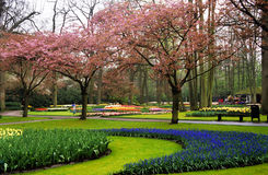 Keukenhof Gardens Royalty Free Stock Photos