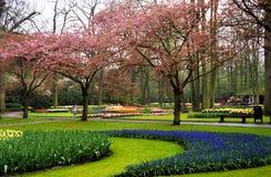 Keukenhof Gardens royalty free stock photos