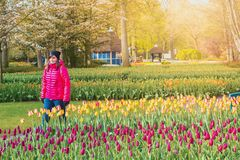Keukenhof Gardens full of flowers, Netherlands stock photography