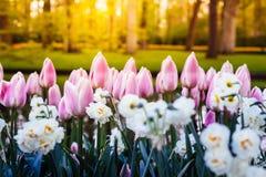 Keukenhof Gardens full of flowers, Netherlands royalty free stock images