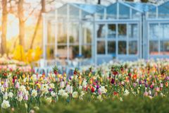 Keukenhof Gardens full of flowers, Netherlands stock photo