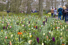 Keukenhof Gardens Stock Photo