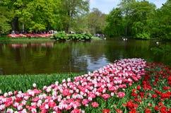 Keukenhof-Garten, die Niederlande Bunte Blumen und Blüte im niederländischen Frühlingsgarten Keukenhof Stockbild