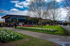 Keukenhof, holandie - Kwiecień 23: Tulipan uprawia ogródek Kwiecień 23, Fotografia Royalty Free