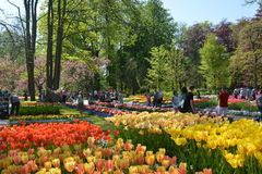 Keukenhof 2016 - Holland Stock Image