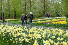 KEUKENHOF庭院,荷兰- 4月08 :Keukenhof是有7百万装饰灯泡的世界的最大的花园在区域  库存图片