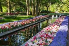 Keukenhof - Largest flower garden in Europe - Holland Stock Photography