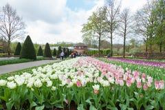 Keukenhof, Lisse, Netherlands Stock Image
