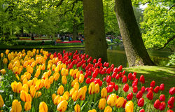 Keukenhof, The Netherlands Royalty Free Stock Photos