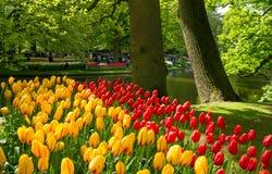Keukenhof, The Netherlands. Beautiful flower background from the Keukenhof flower garden near Lisse, The Netherlands Royalty Free Stock Photos