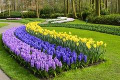 Keukenhof, The Netherlands. Beautiful flower in Keukenhof park, The Netherlands Royalty Free Stock Photo