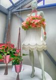 Pink calla lilly floristic decor and dummy in flower greenhouse,. KEUKENHOF, NETHERLANDS - MAY 5, 2016: Pink calla lilly floristic decor and dummy in flower Royalty Free Stock Image