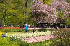 Tourists and blooming spring flowers in the Keukenhof Park, Netherlands. KEUKENHOF, NETHERLANDS - MAY 5, 2016: Tourists and blooming spring flowers in the royalty free stock images