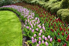 Keukenhof ogródów naturalnego parka fala czerwieni i menchii tulipany Zdjęcia Royalty Free