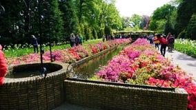 Keukenhof, Paesi Bassi, Olanda; 11/05/2019: Paesaggio della molla di stordimento, giardino famoso di Keukenhof con i tulipani fre fotografia stock libera da diritti