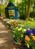 Keukenhof park Royalty Free Stock Photo