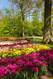 Keukenhof park Stock Photos