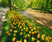 Keukenhof park Royalty Free Stock Photography