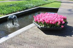 Keukenhof-Park in den Niederlanden lizenzfreies stockbild