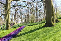 Keukenhof-Park in den Niederlanden lizenzfreie stockfotografie