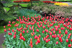 Keukenhof park is full of colorful flowers. Netherlands Royalty Free Stock Photos