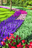 Keukenhof park in Holland Stock Image