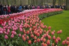 Keukenhof park Holland Stock Image
