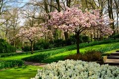 Keukenhof park in Netherlands in spring time ,  blooming tree.  stock photos